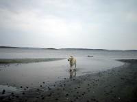 Hugo spatserar i vattenbrynet