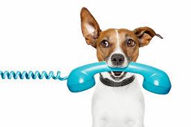 Dog kennels Doncaster