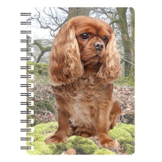 030717115594 3D Notebook Cavalier Ruby