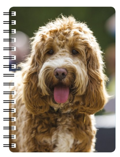 030717123254 3D Notebook Cockapoo 3