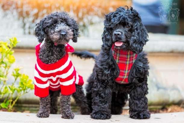 Dog Adoption Rescue