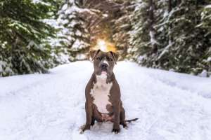 Best Dog Photographer