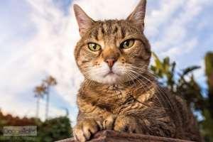 Best Cat Photographer