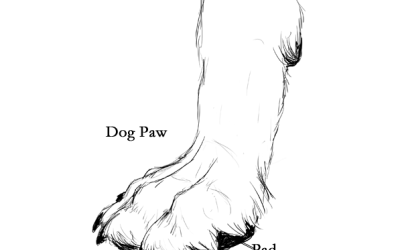 How Often Do You Get Your Pet's Nails Clipped?