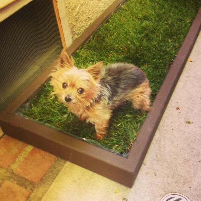 Puppy Dog Grass Pad