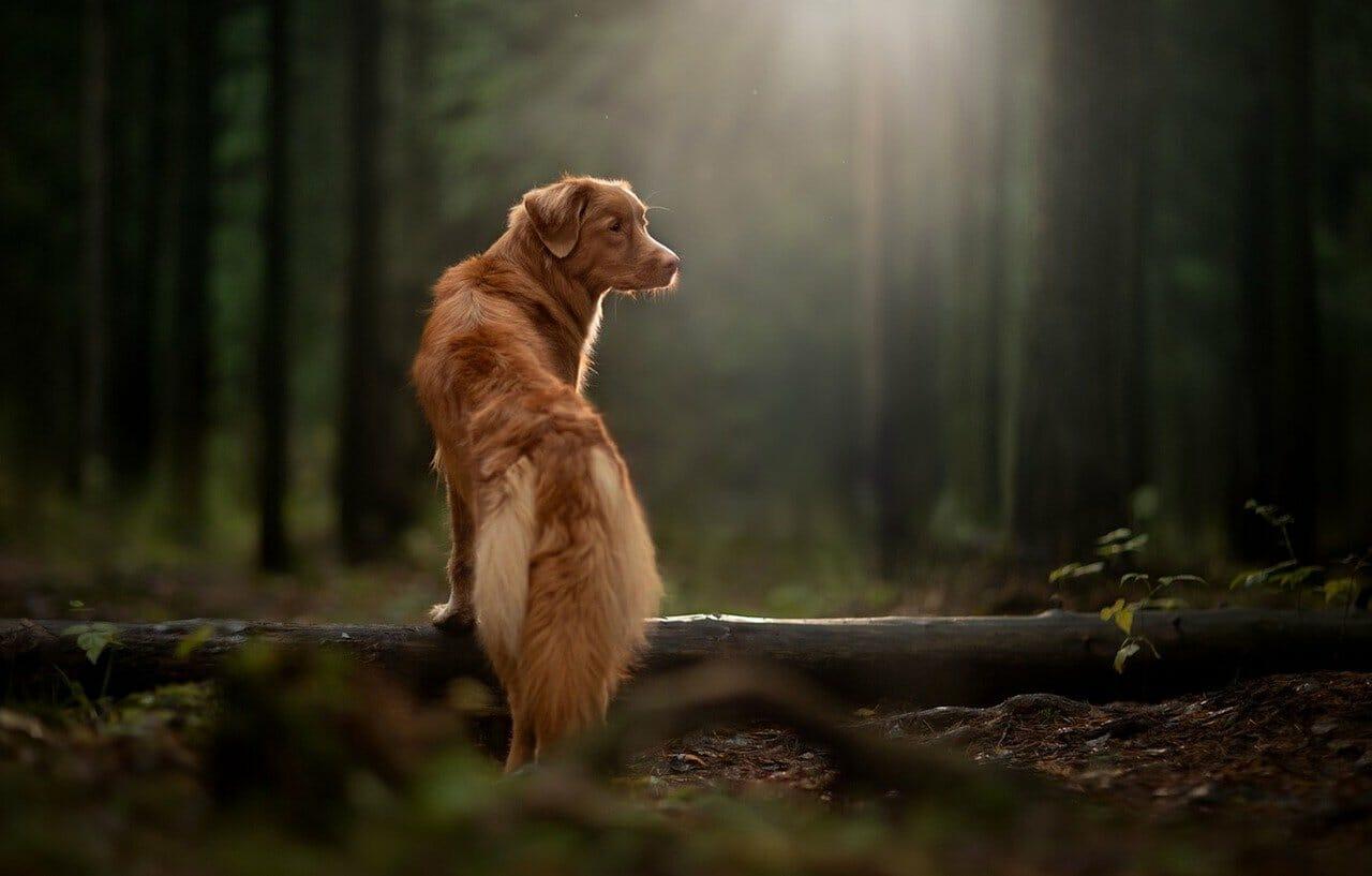 Hundewälder