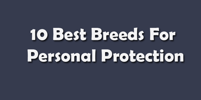 Protection Personal Jobs Virginia