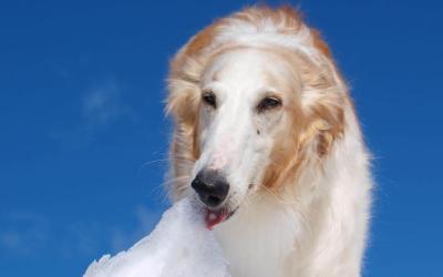 Kylande produkter till din hund