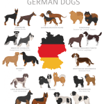 75 Unique German Dog Names For Male And Female Dogs