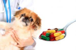 Image result for Over-the-Counter Human Meds That Can Be Used on Pets