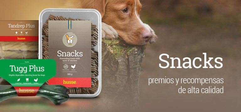 galletas-para-perros.jpg