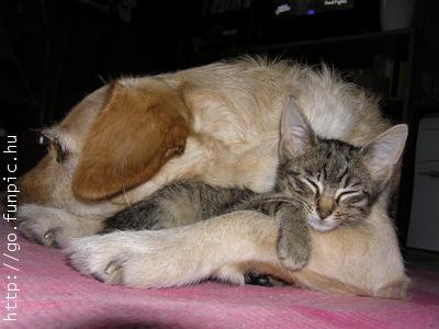 Dog holds cat nap
