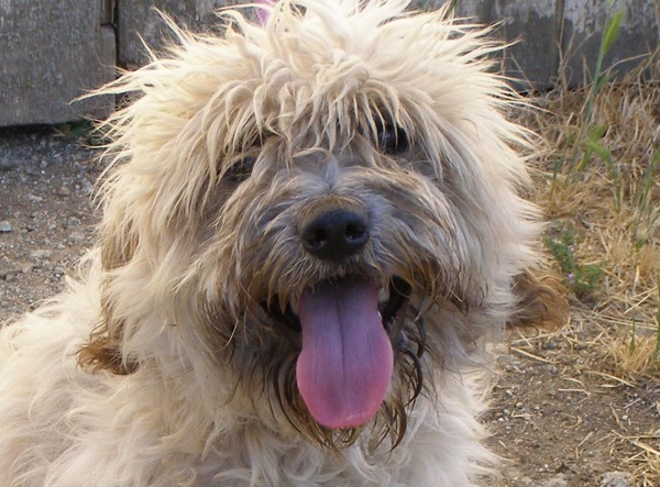 Shaggy Puppy Dane e1311562446439