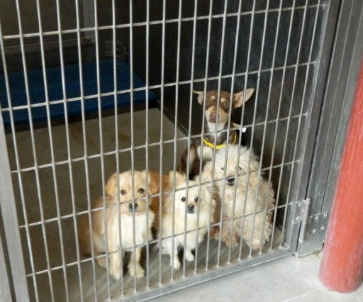 Rescue us, please?