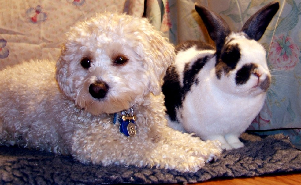 Peaceful pets dog + house rabbit
