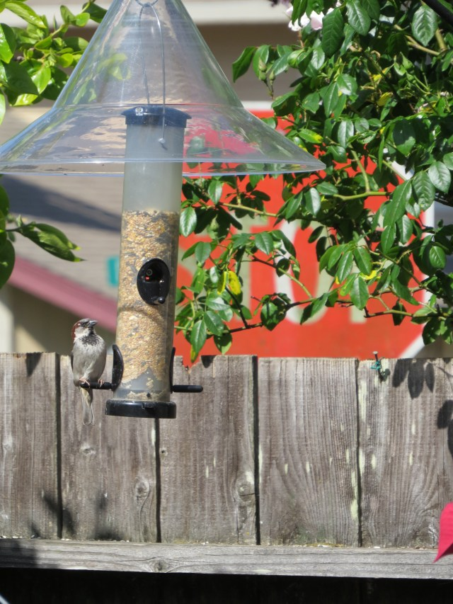 Catch Songbirds only on camera, thanks!