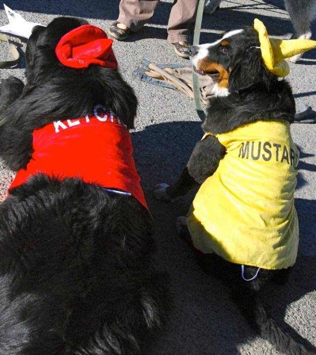 Ketchup & Mustard dogs copy