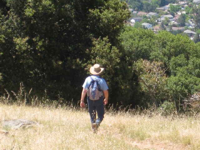 Oak savanna of Marin County hills