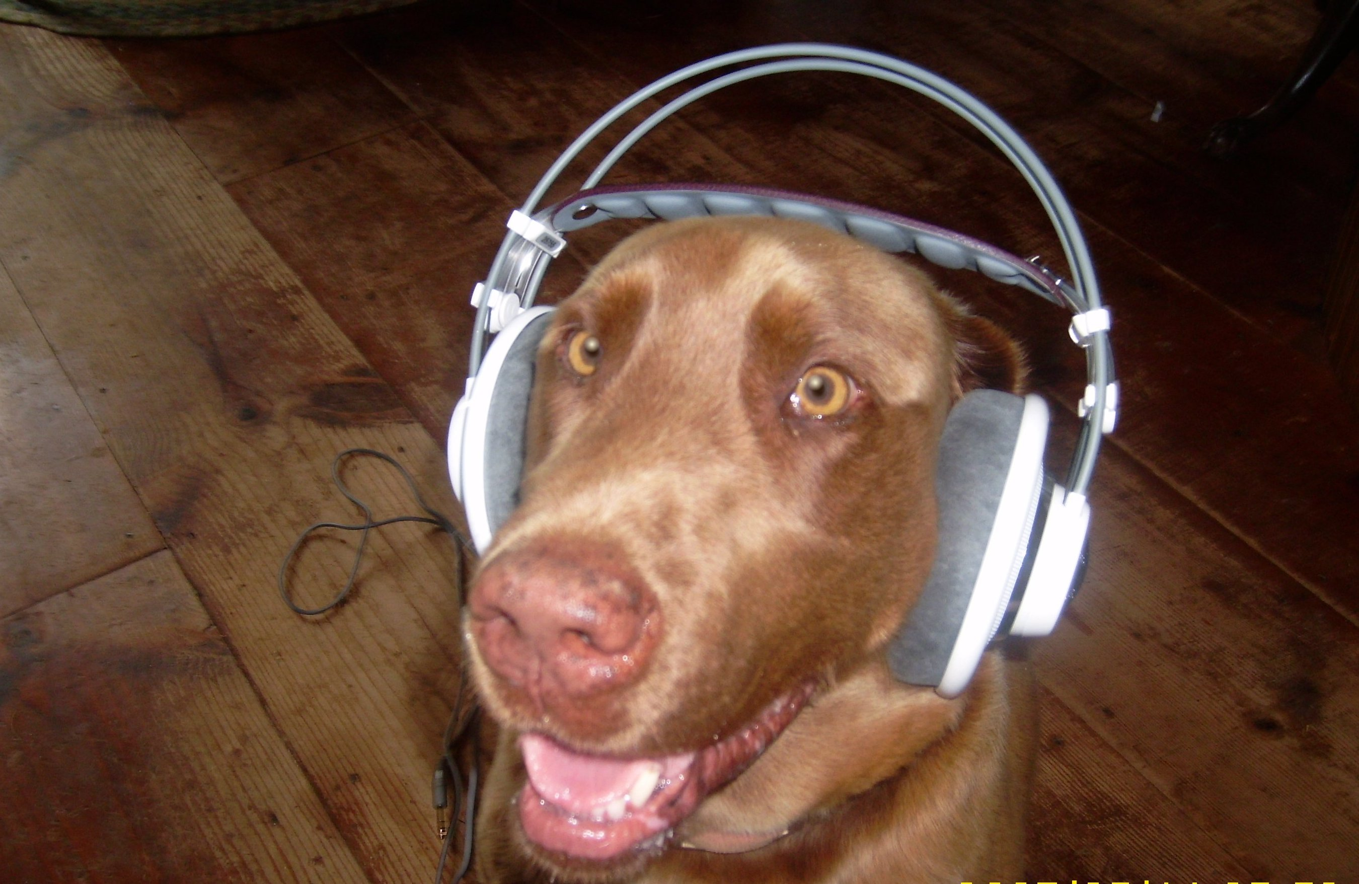 Hi-fve or low fi, I love music.