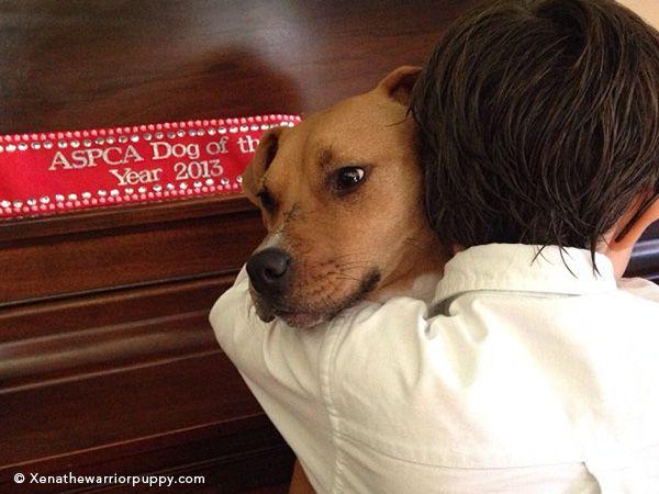 Foto Cão sobrevive e torna-se cão do ano de 2013