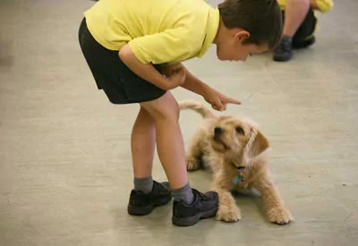 Young Handler at our puppy Classes