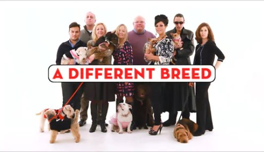 A Different Breed Sky1 Dogumentary