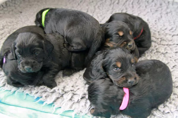 Puppies Asllep in Crate