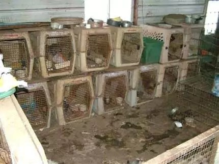 Would you knowingly buy a puppy from here? Then never buy from Pet Shops