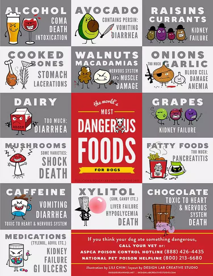 Poster Depicting Types of Food Poisonous to Your Dog