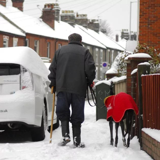 Dog Walking In Snowy Conditions Antifreeze Poisoning