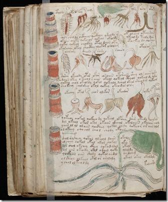 Manuscrito Voynich-01