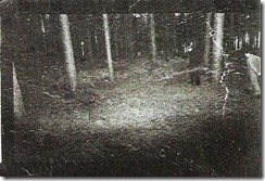 rendlesham_forest