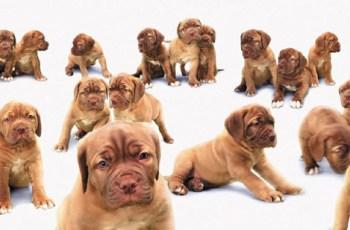 Beware The Dog Breeder Scam 1