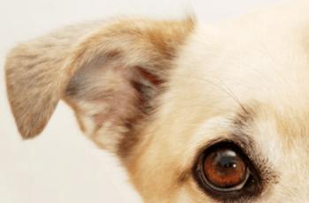 Bad Dog Legislation Failed Tragic Dog Attack Victim Jade Anderson 1