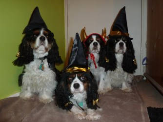 Welcome to Sharon Hardy's 'Cavalier Coven'...