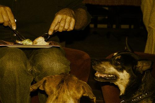 dog eating photo