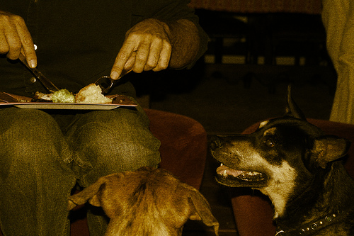 dog eating photo