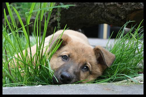 2807613243_7539f7478f_dog-home