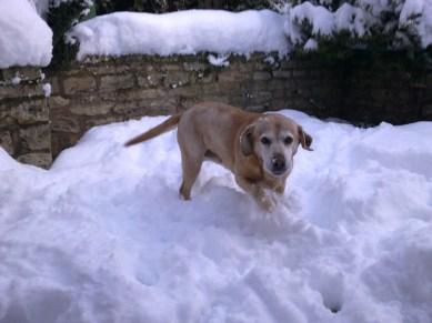 A snowy Chloe