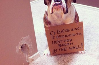 Dog Wall of Shame 2