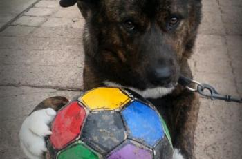 Football Loving Dogs Looking for New Homes in the National Media! 2