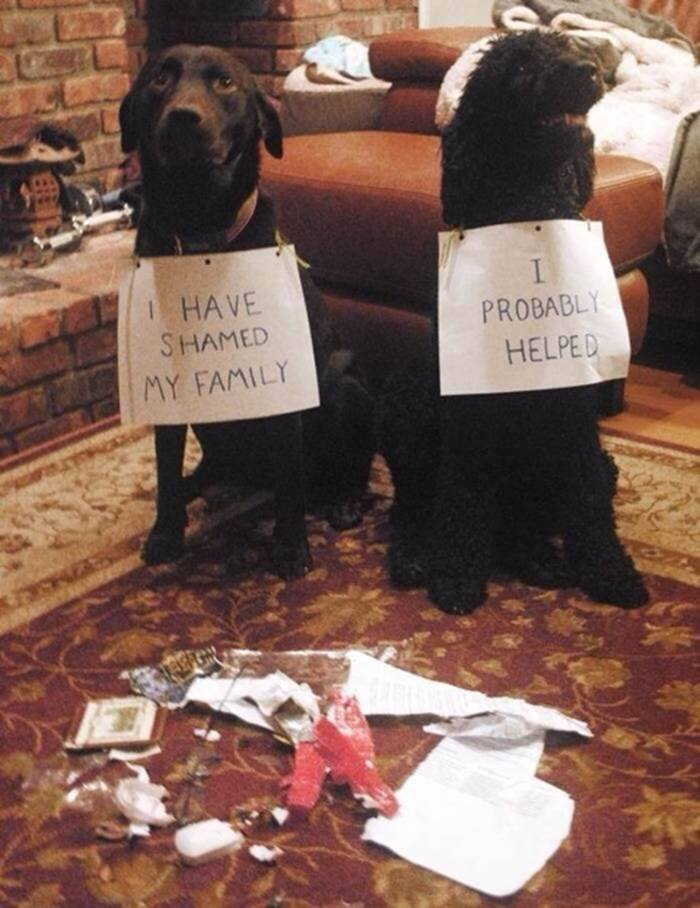 dog shame help