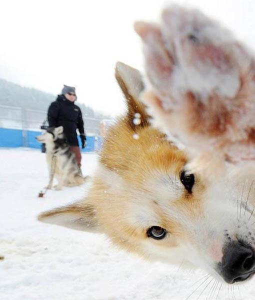 dog_photobomb_9