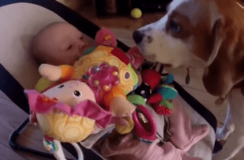 Dog Makes Baby Cry But What He Does Next is Beautiful 1