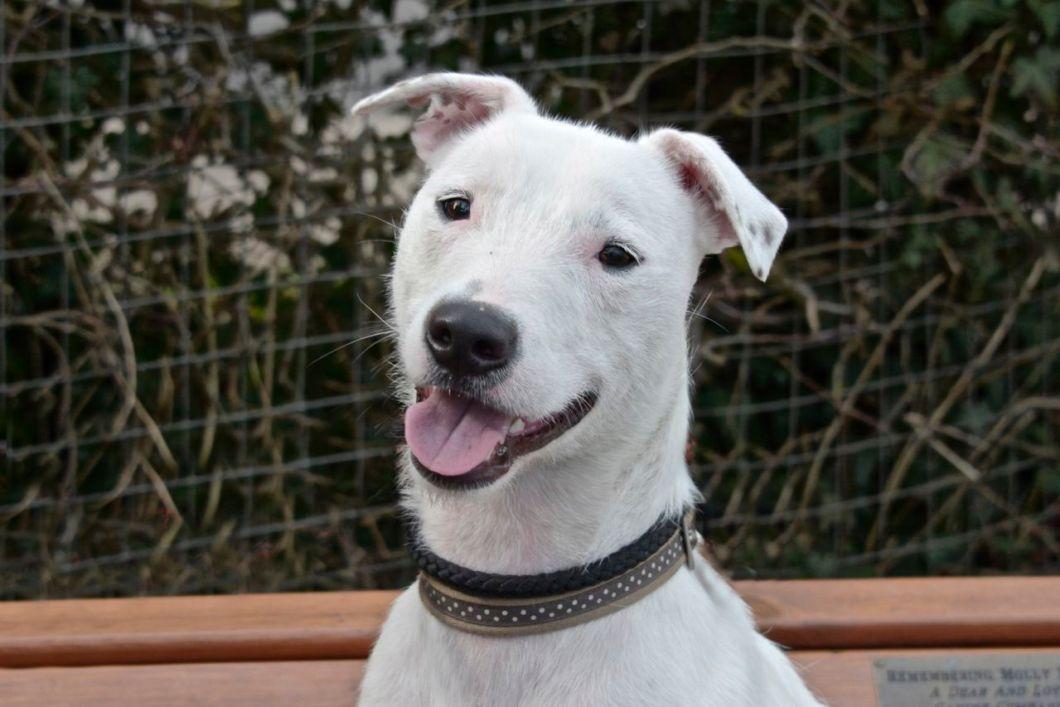 https://i1.wp.com/www.dogmagazine.net/wp-content/uploads/2014/10/Snowy-Leicester-Animal-Aid.jpg?resize=1060%2C707