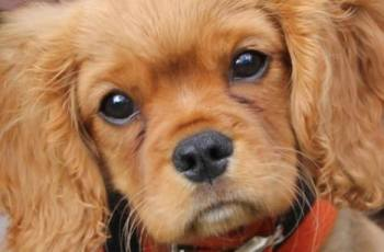 Strictly Come Dancing Judge Backs Campaign for Healthier Cavaliers 3
