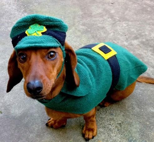 St-Patricks-Day-Dogs