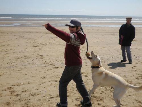 Dog on beach - Photo by Greg Murray