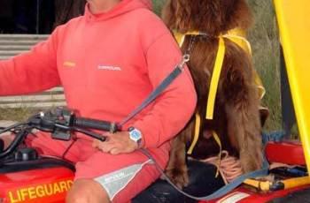 Bilbo the Lifesaving Newfoundland Sadly Passes Away 2