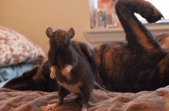 Meet the Newest Odd Couple All Animal Lovers Need to Know About 2